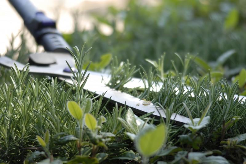 Bel âge / Seniors : ARCADE effectue vos travaux de jardinage