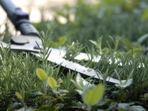 Travaux de bricolage et de jardinage
